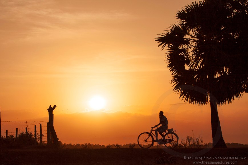 village scenery, sunset scenery, village sunset, sunset silhouette, silhouette humans, silhouette cyclist, silhouette people, people cycle, people walking with cycle, borther and sister, displacement, replacement of displaced people, displaced people, batticaloa displaced people, batticaloa scenery, jaffna displaced people, people scenery, story telling image, rural lifestyle, man riding a bicycle,village lifestyle