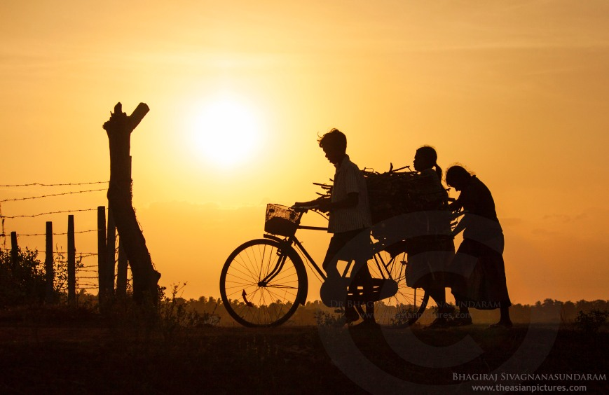 village scenery, photographing silhouette,sunset scenery, village sunset, sunset silhouette, silhouette humans, silhouette cyclist, silhouette people, people cycle, people walking with cycle, borther and sister, displacement, replacement of displaced people, displaced people, batticaloa displaced people, batticaloa scenery, jaffna displaced people